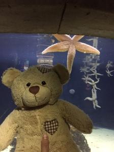 William and the Starfish